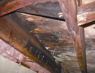 mold and rot in a Providence crawl space